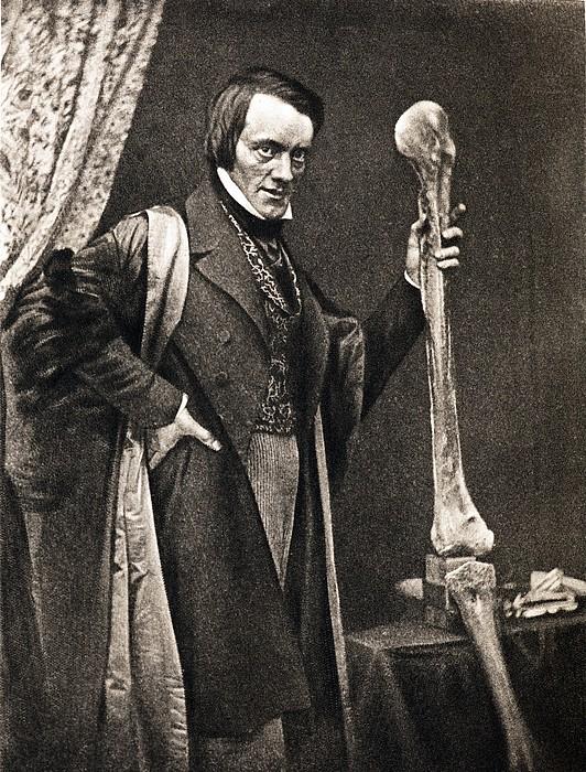 1846 Richard Owen And Moa Leg Fossil Print by Paul D Stewart