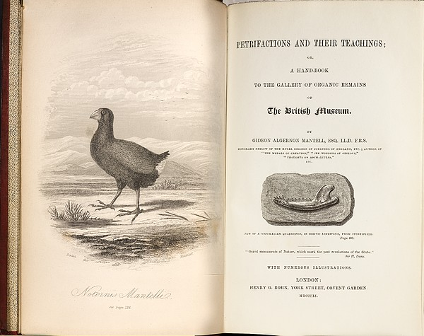 1851 Takahe Mantell's Petrifactions Book Print by Paul D Stewart