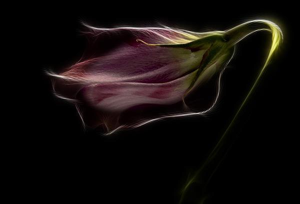 Flower Print by Stylianos Kleanthous