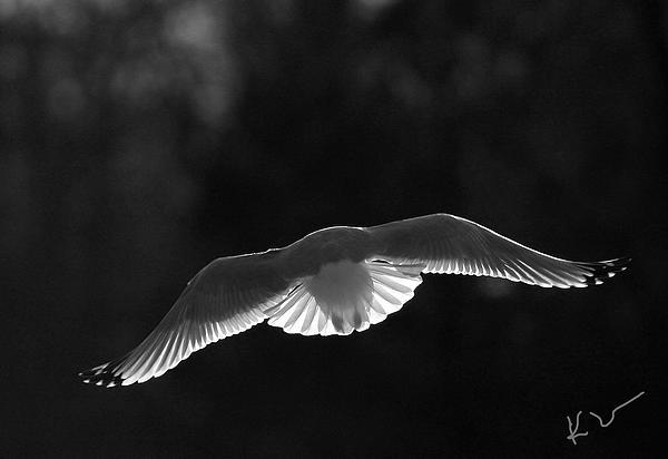 Karol  Livote - Glowing Wings