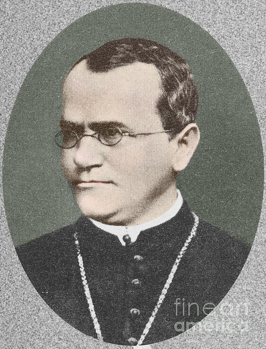 Gregor Mendel, Father Of Genetics Print by Science Source