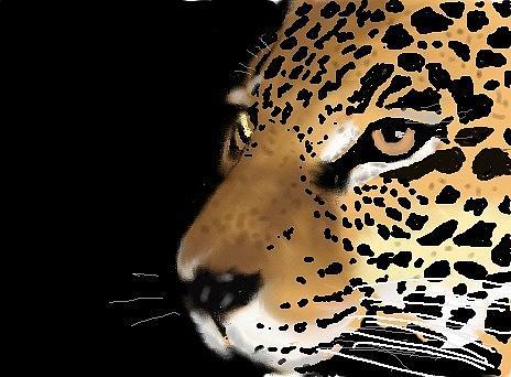 Jack Jk Morland - Leopard