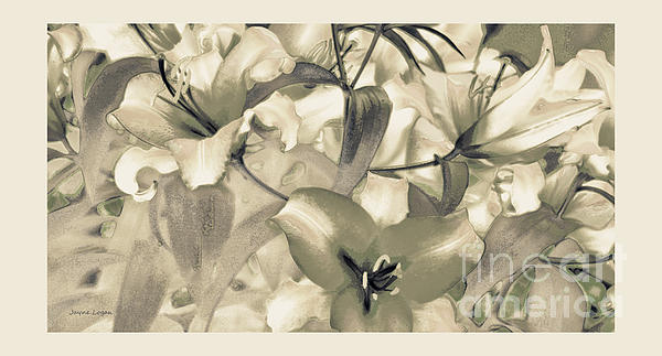 Jayne Logan Intveld - Lily Garden