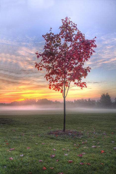Nick Mares - Morning landscape