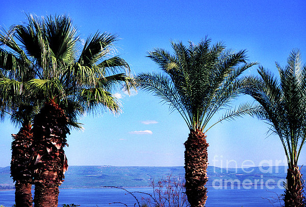 Sea Of Galilee From  Mount Of The Beatitudes Print by Thomas R Fletcher