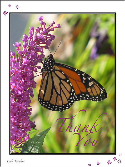 Debra     Vatalaro - Thank You Card