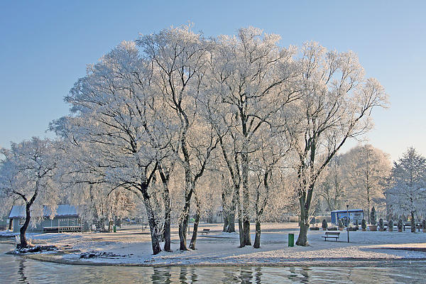 Ralf Kaiser - White Frost Tree