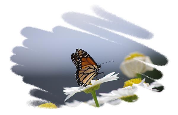 Butterfly Print by Gerald Kloss
