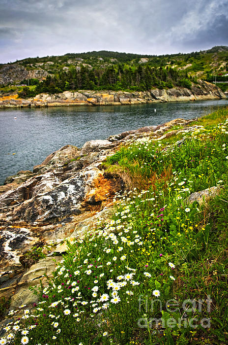 Atlantic Coast In Newfoundland Print by Elena Elisseeva