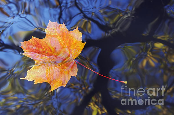 Autumn Leaf On The Water Print by Michal Boubin