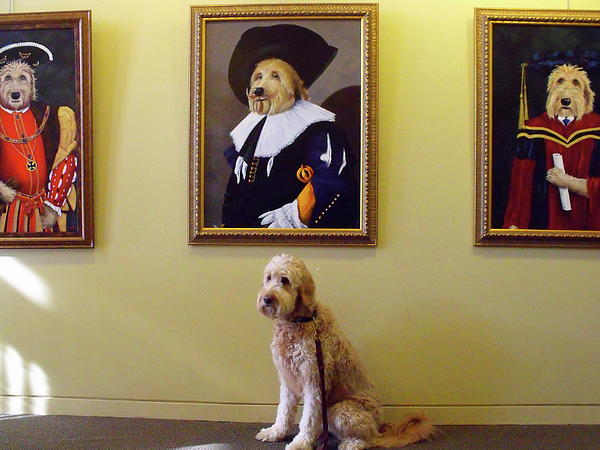 Gunther At His Show  Print by Diane Daigle