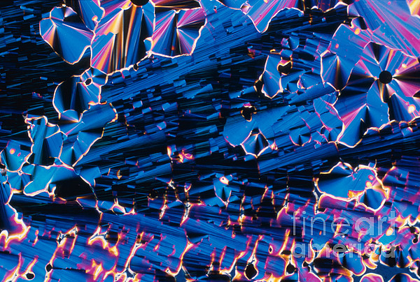 Liquid Crystalline Dna Print by Michael W. Davidson