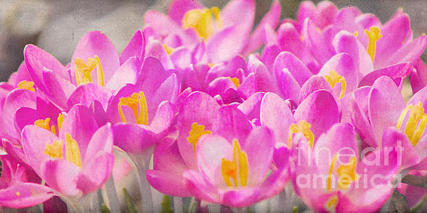 Springtime Print by Angela Doelling AD DESIGN Photo and PhotoArt