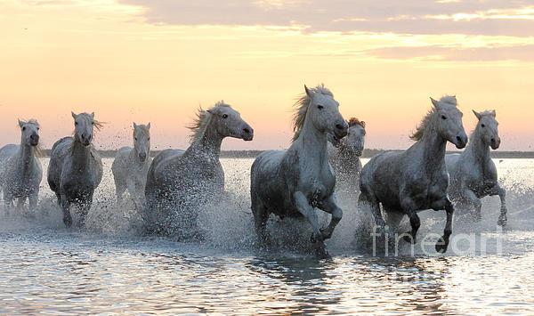 Wild Horses Print by Egija Labanovska
