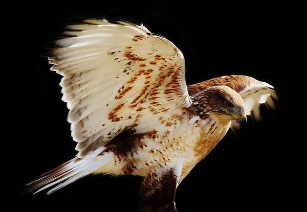 Wings Print by Paulette Thomas