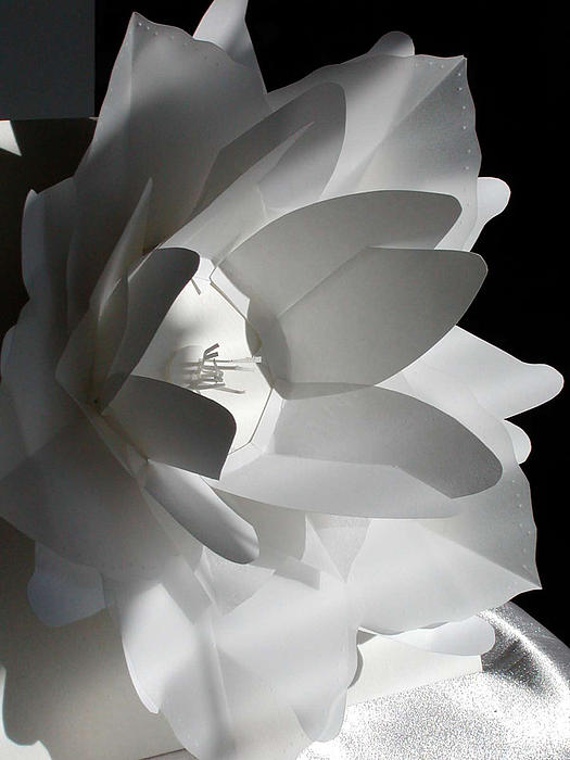 Nancy Mergybrower - 3d Flower