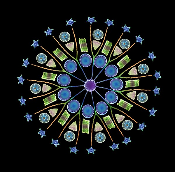 Diatom Assortment, Sems Print by Steve Gschmeissner
