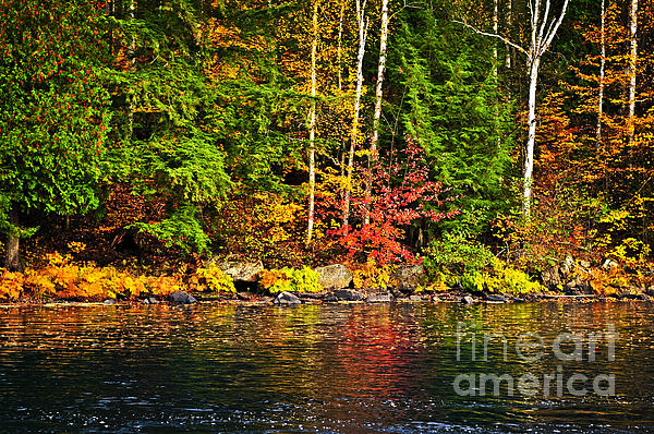 Fall Forest And River Landscape Print by Elena Elisseeva