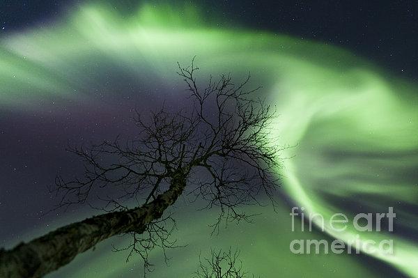 Northern Lights In The Arctic Print by Arild Heitmann