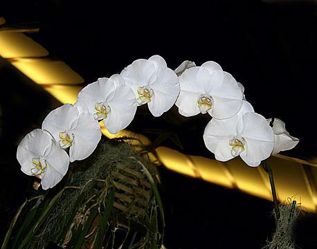Tony Weatherman - Orchid