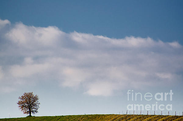 Lonely Tree Print by Mats Silvan