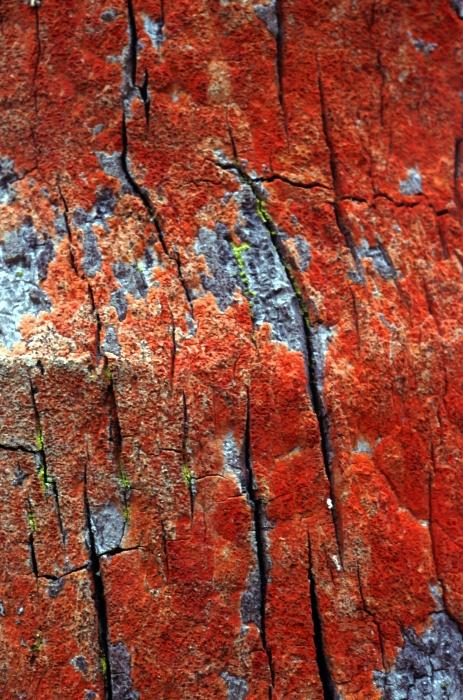 Tree Bark Print by John Foxx