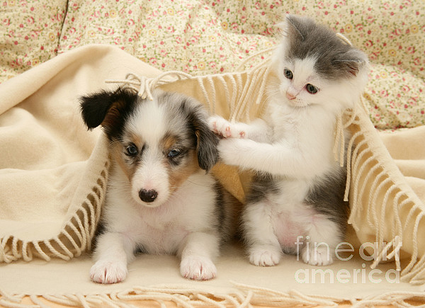 Kitten And Pup Print by Jane Burton