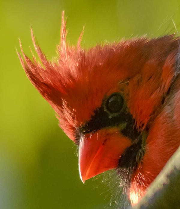 Brian Stevens - Cardinal