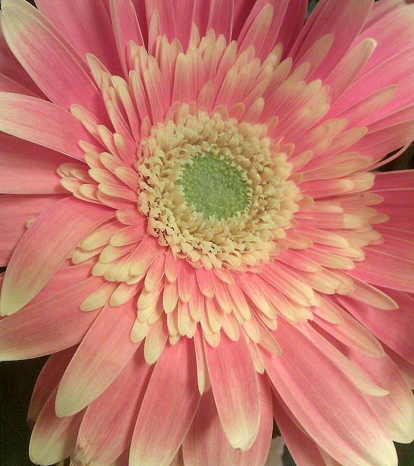 Flower Print by Kristen Pagliaro