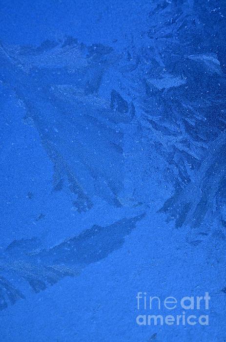 Frost On A Windowpane Print by Thomas R Fletcher