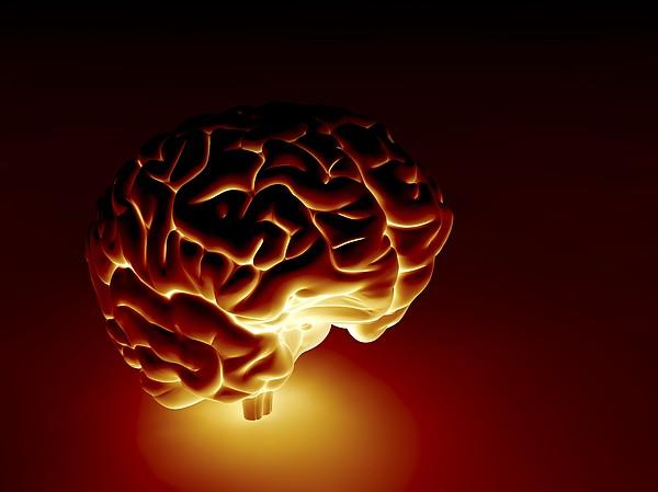 Human Brain, Artwork Print by Pasieka