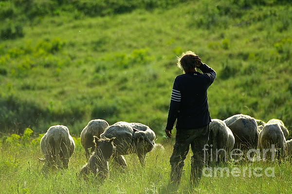 Shepherd Print by Odon Czintos