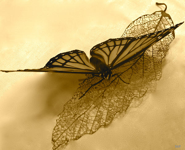 Debra     Vatalaro - Butterfly Collection Design
