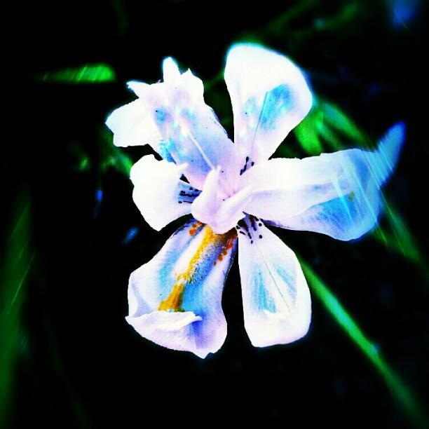 Brandi Suarez - A Blue Day