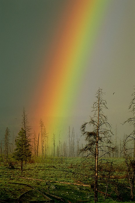 A Brilliantly Colored Rainbow Ends Print by Norbert Rosing