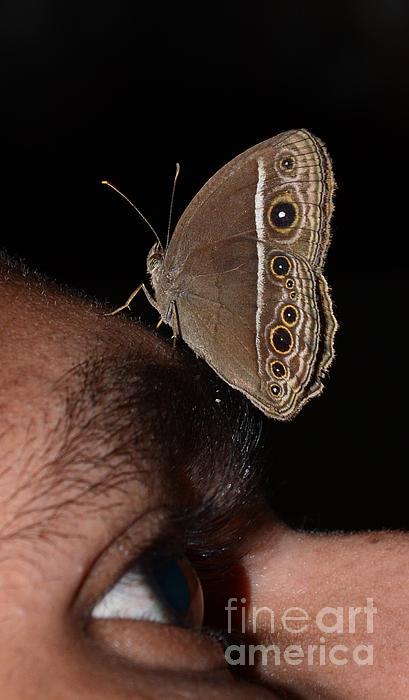 Jiss Joseph - A Butterfly On My Eye