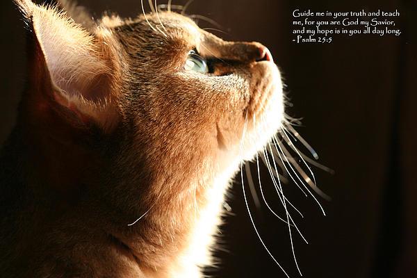 A Cat Prayer Print by Wendi Matson