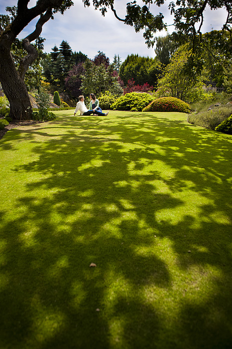 A Couple Sits On A Dappled Lawn Print by Taylor S. Kennedy