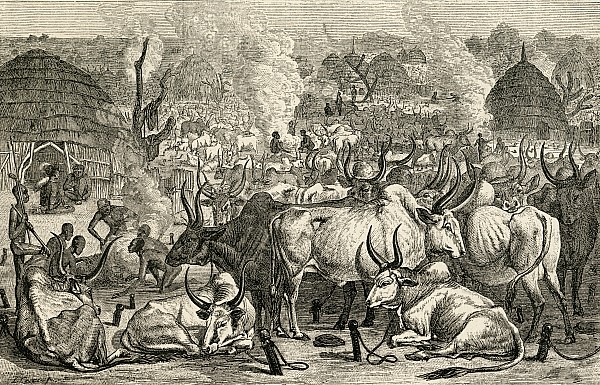 A Dinka Cattle Park, Southern Sudan Print by Ken Welsh