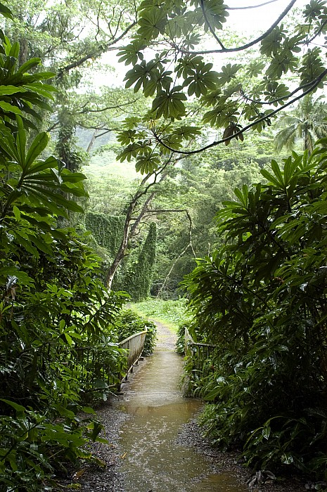 A Flooded Path At Manoa Falls Print by Stacy Gold