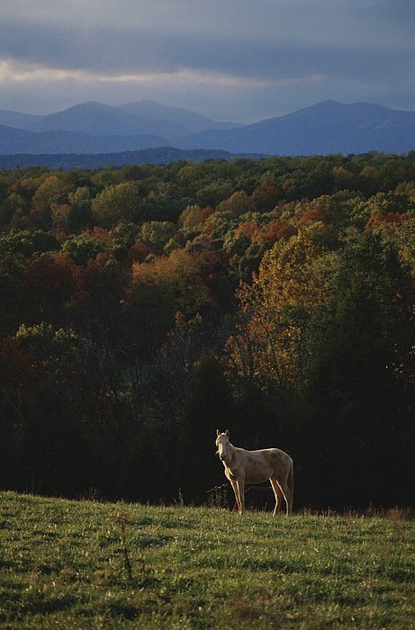 A Horse Stands On A Hill Overlooking Print by Sam Kittner