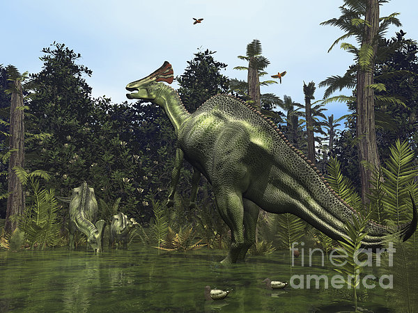 A Lambeosaurus Rears Onto Its Hind Legs Print by Walter Myers