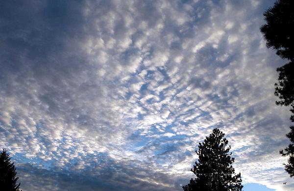 Will Borden - A Mackerel Sky