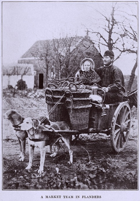A Market Team In Flanders. Two Dogs Print by Everett