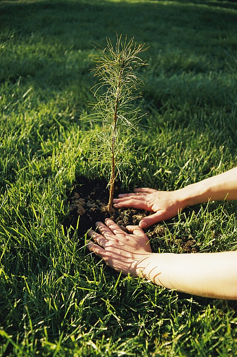 A Pair Of Hands Gently Tamp Soil Print by Scott Sroka