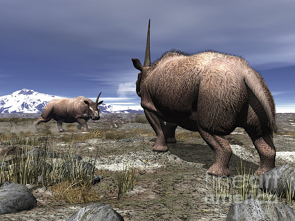A Pair Of Male Elasmotherium Confront Print by Walter Myers