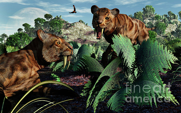 A Pair Of Sabre-toothed Tigers Print by Mark Stevenson
