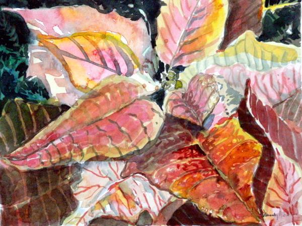 A Peach Of A Poinsettia Print by Mindy Newman