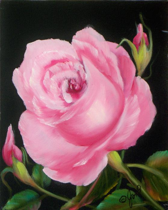 A Pink Rose Painting  - A Pink Rose Fine Art Print