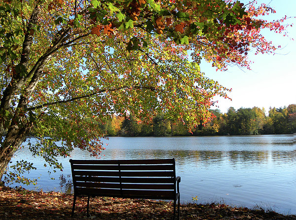 A Place For Thanks Giving Print by Sandi OReilly